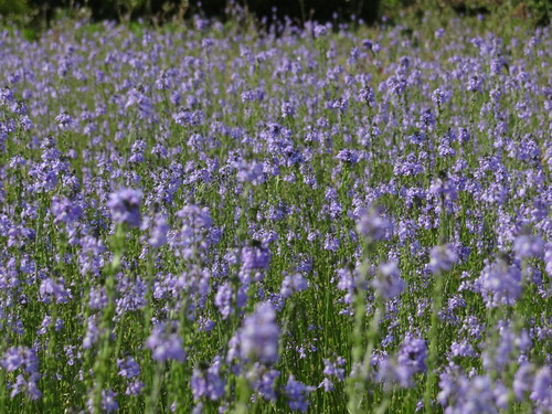 初夏の香り♪_e0240147_2346844.jpg