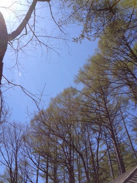 新緑の季節へ_b0147051_114442100.jpg