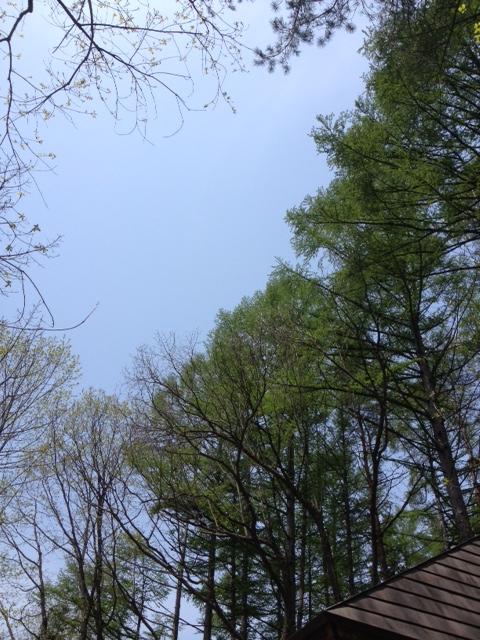 新緑の季節へ_b0147051_11454623.jpg