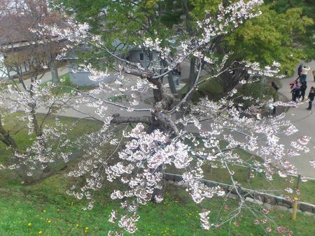 春の五稜郭_b0106766_2314529.jpg
