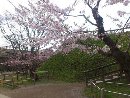 春の五稜郭_b0106766_23145311.jpg