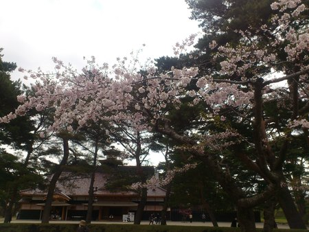 箱館奉行所と五稜郭公園の桜_b0106766_2372558.jpg