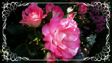 M邸の薔薇_b0214473_21555649.jpg