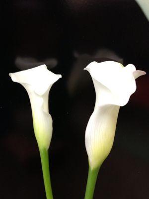 白カラー_d0099708_13521592.jpg