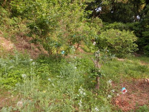 秘密の花園で。_a0125419_705411.jpg