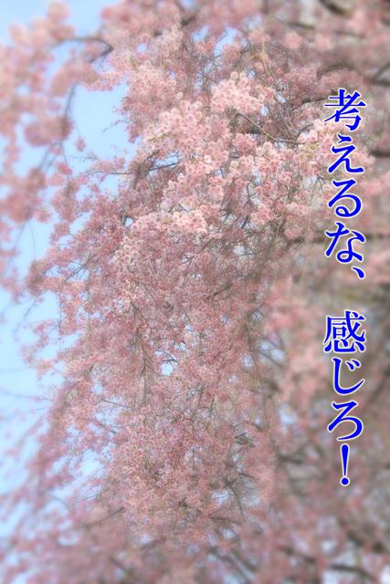 a0267861_2147152.jpg