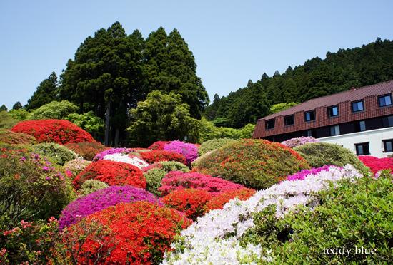 hotel de Yama in Spring  春の箱根 山のホテル_e0253364_1334931.jpg