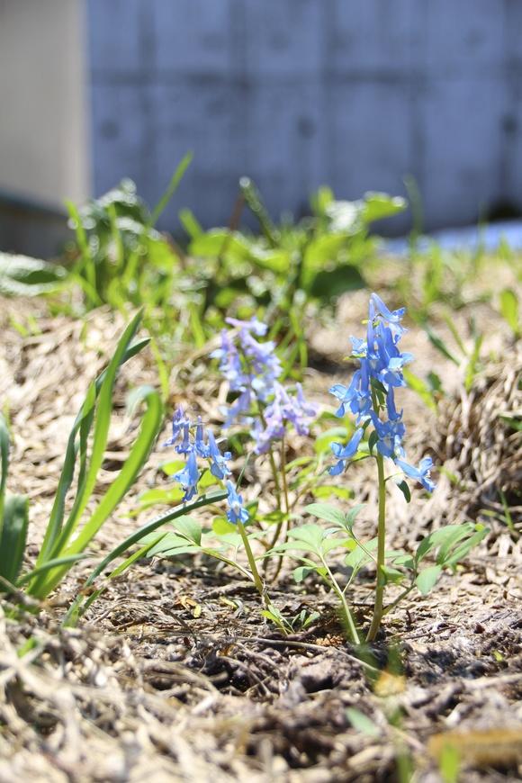 春がやっとこきました!_d0087270_14315197.jpg