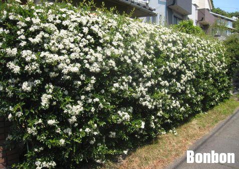 花びらの白い色は♪_e0170272_18225731.jpg