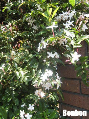 花びらの白い色は♪_e0170272_1823443.jpg