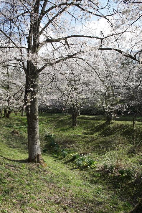 置賜桜回廊 殿入りザクラ_e0165983_1010124.jpg