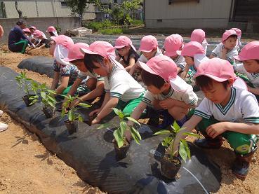 ゆりぐみ野菜苗植え_c0212598_14492571.jpg