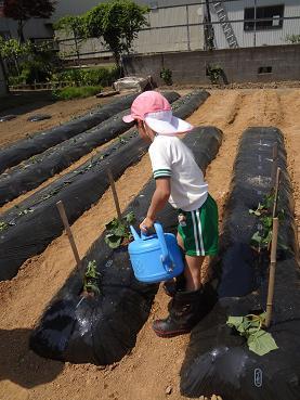 ゆりぐみ野菜苗植え_c0212598_14493136.jpg