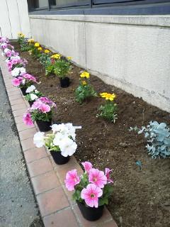 花壇作りのお手伝い_f0255704_16561699.jpg