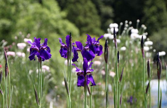菜園 花と蝶_e0048413_20305459.jpg
