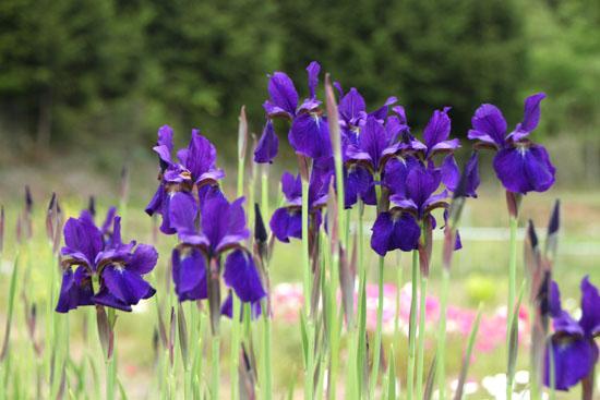 菜園 花と蝶_e0048413_2031455.jpg