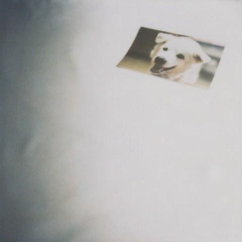 そもそも、犬を飼うことになった理由(ワケ) ②_b0090517_16371794.jpg