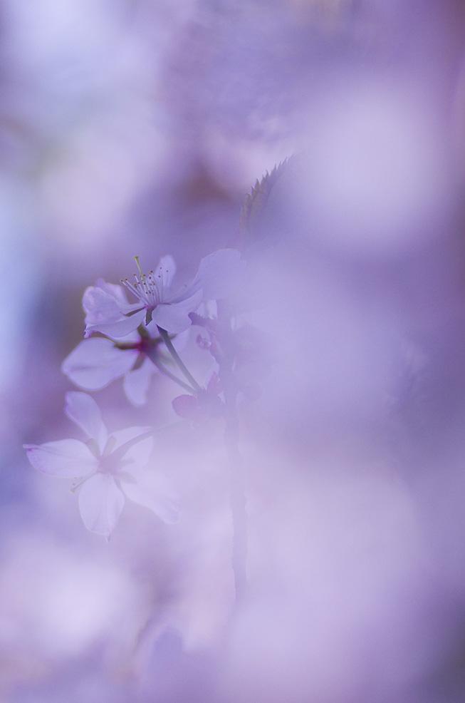 ふんわり桜色_f0152939_20433477.jpg