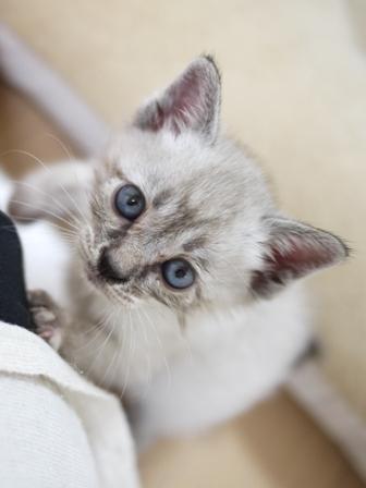 猫のお友だち カン太くんルノーちゃん編。_a0143140_23441836.jpg
