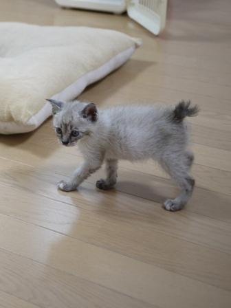 猫のお友だち カン太くんルノーちゃん編。_a0143140_23523368.jpg