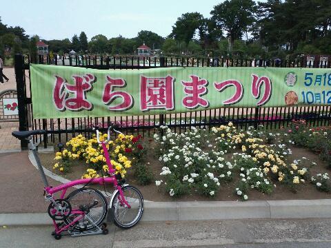 バラ園祭り_d0147944_12575366.jpg
