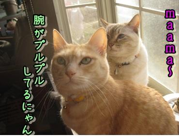 スネオあかちゃん_b0151748_12203570.jpg