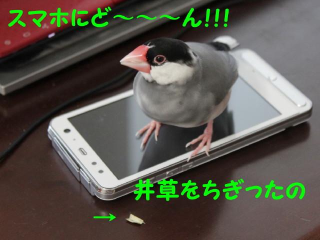 b0158061_2034744.jpg
