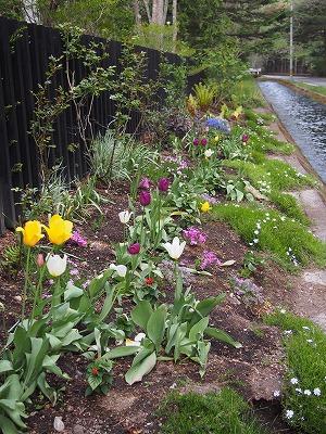 春の庭…、その後の巻_d0133485_6242979.jpg