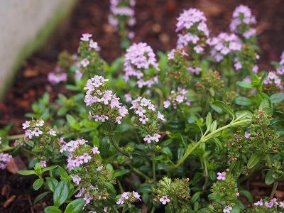 春の庭の手入れ_d0133485_7115974.jpg