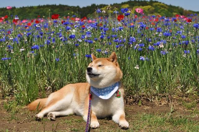 お花畑_a0126590_2331043.jpg