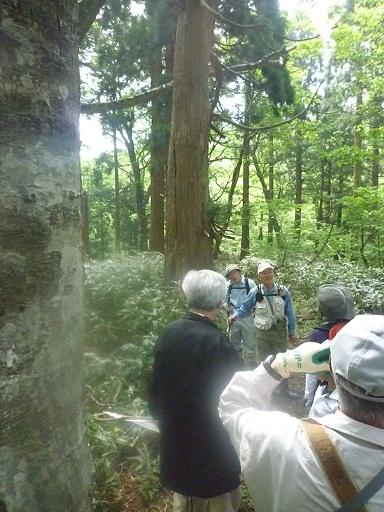 安蔵寺山ブナ林を歩く のご案内_d0087595_1413442.jpg