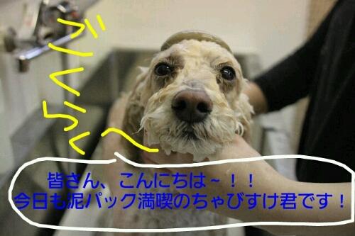 b0130018_2223715.jpg
