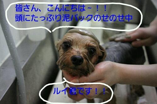 b0130018_22293354.jpg