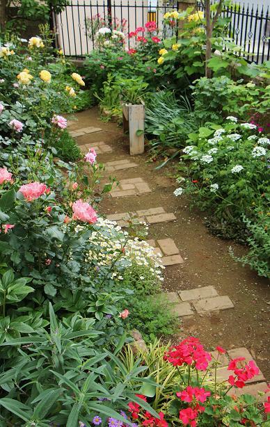 5月 庭の花だより (バラ編)_d0150720_10315395.jpg