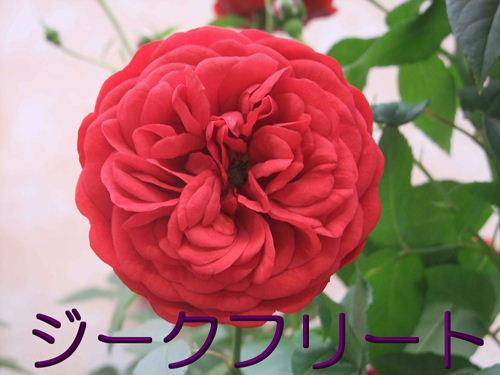 b0165139_21581047.jpg