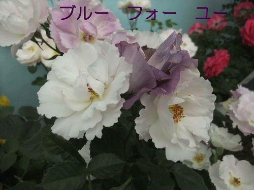 b0165139_22125615.jpg