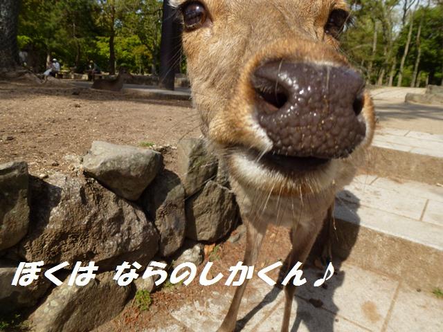 f0184055_10375635.jpg