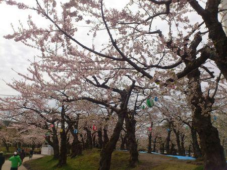 桜_b0106766_23275312.jpg