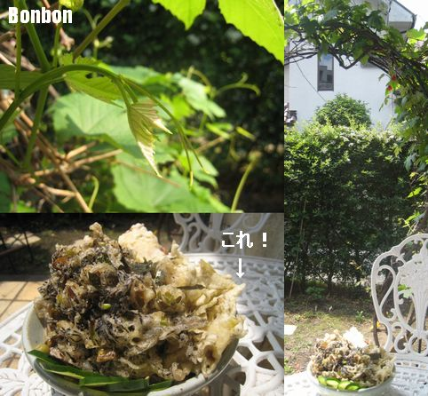 間引きがてらの葡萄の新芽の天ぷら_e0170272_20272698.jpg
