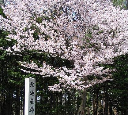円山桜色_f0078286_1042421.jpg