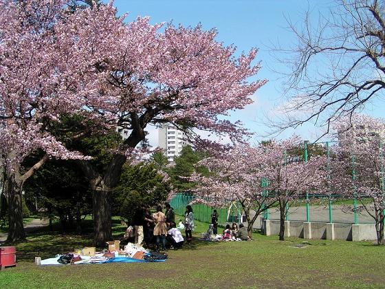 円山桜色_f0078286_10425542.jpg