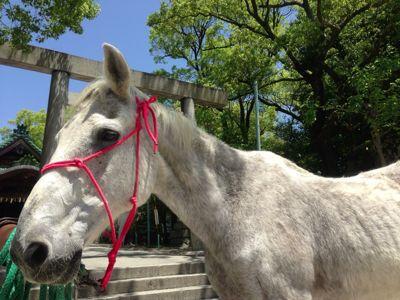 えっ!馬!?_b0164894_1725545.jpg