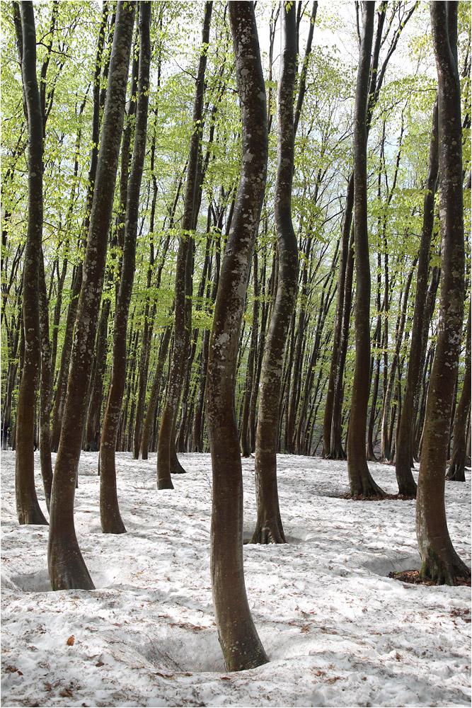 森の恵み 水の潤い_e0031502_2025873.jpg
