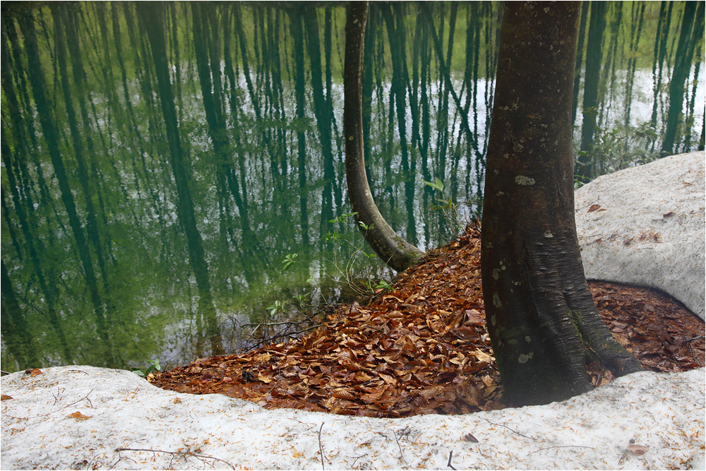 森の恵み 水の潤い_e0031502_2032083.jpg