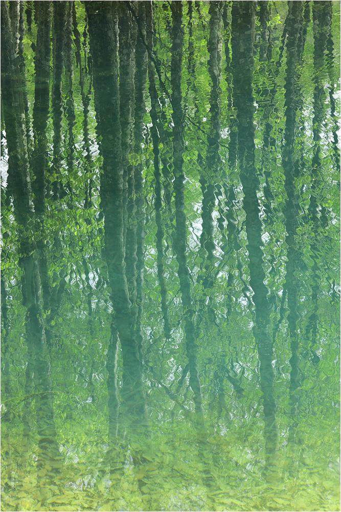 森の恵み 水の潤い_e0031502_2033036.jpg