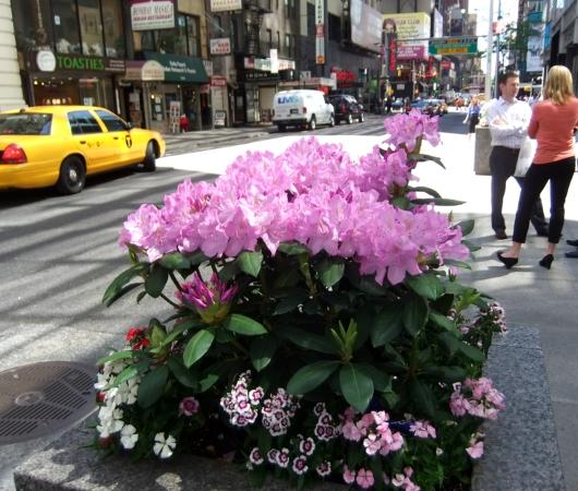 初夏のニューヨークのミッドタウン風景_b0007805_1235016.jpg