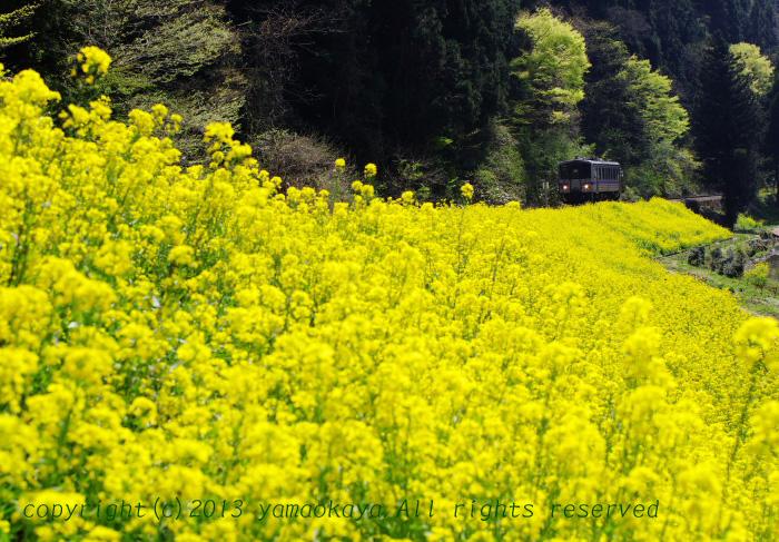 春色の堤_d0309612_741525.jpg