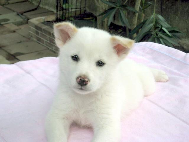 そもそも、犬を飼うことになった理由(ワケ) ⑥_b0090517_1132352.jpg