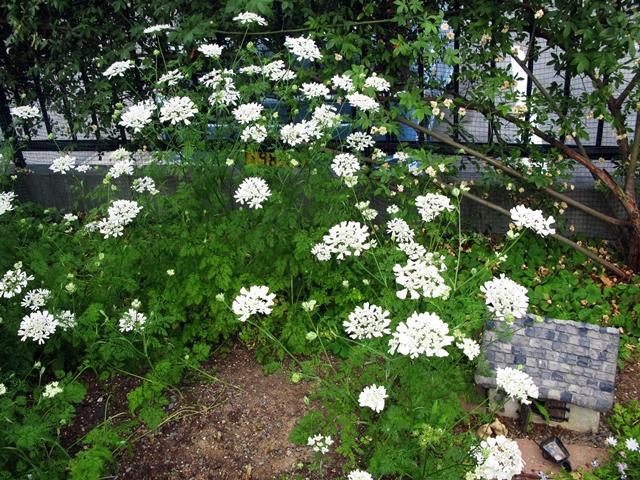 ホワイト・ガーデン_f0129726_23193915.jpg