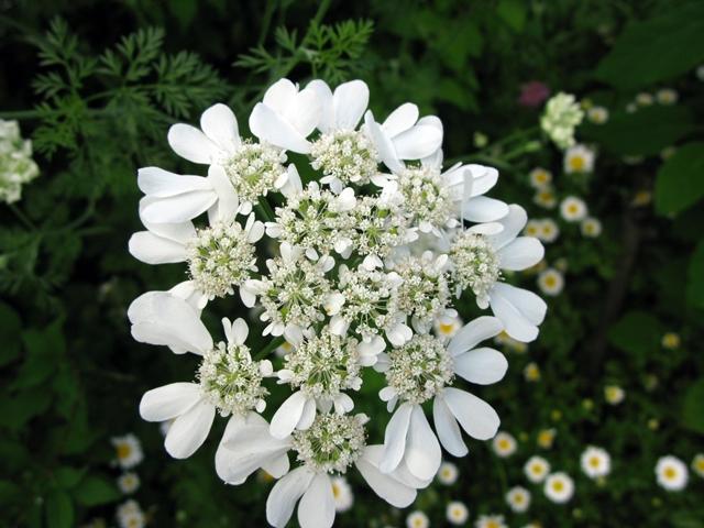 ホワイト・ガーデン_f0129726_23251317.jpg